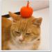 ドクターXベンケーシー役の猫こあぶちゃんがかわいい!由来は?